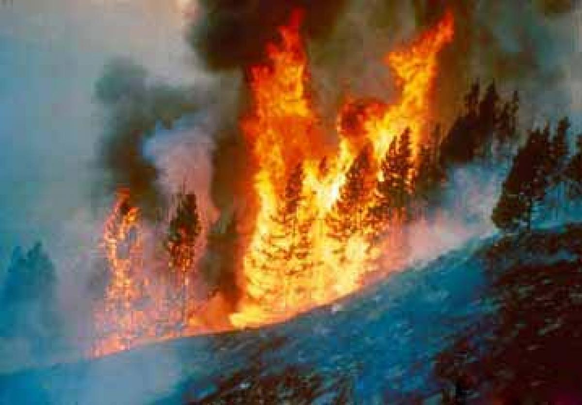 Fire engulfs forests in Rajouri