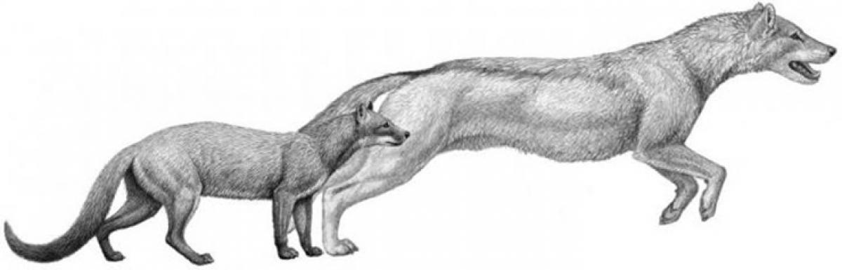 Climate change helped dogs evolve too