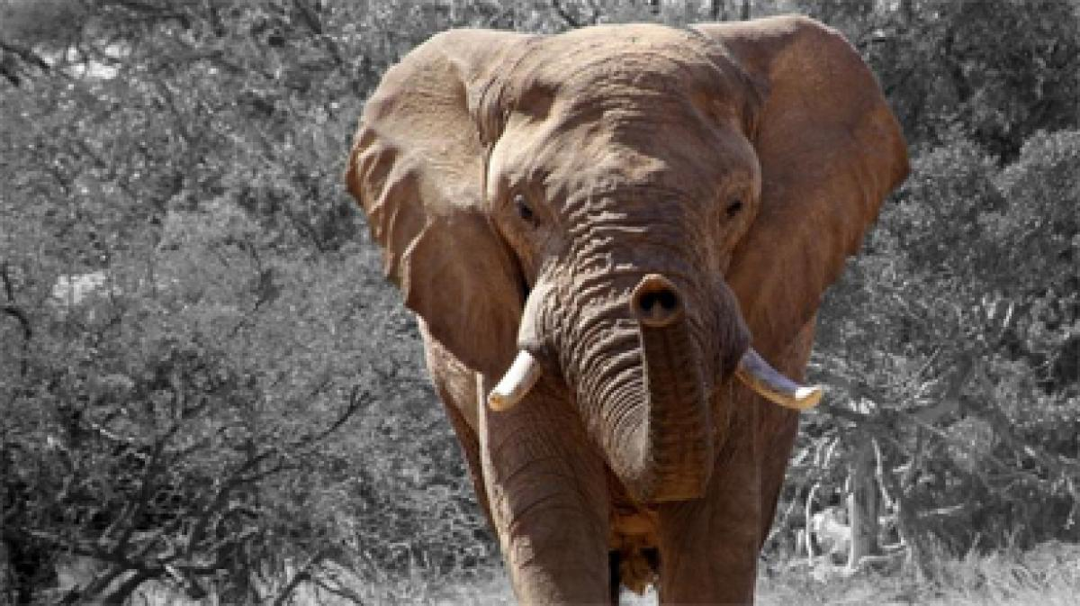 Spurned pachyderm angry after losing a fight for a mate goes berserk in China