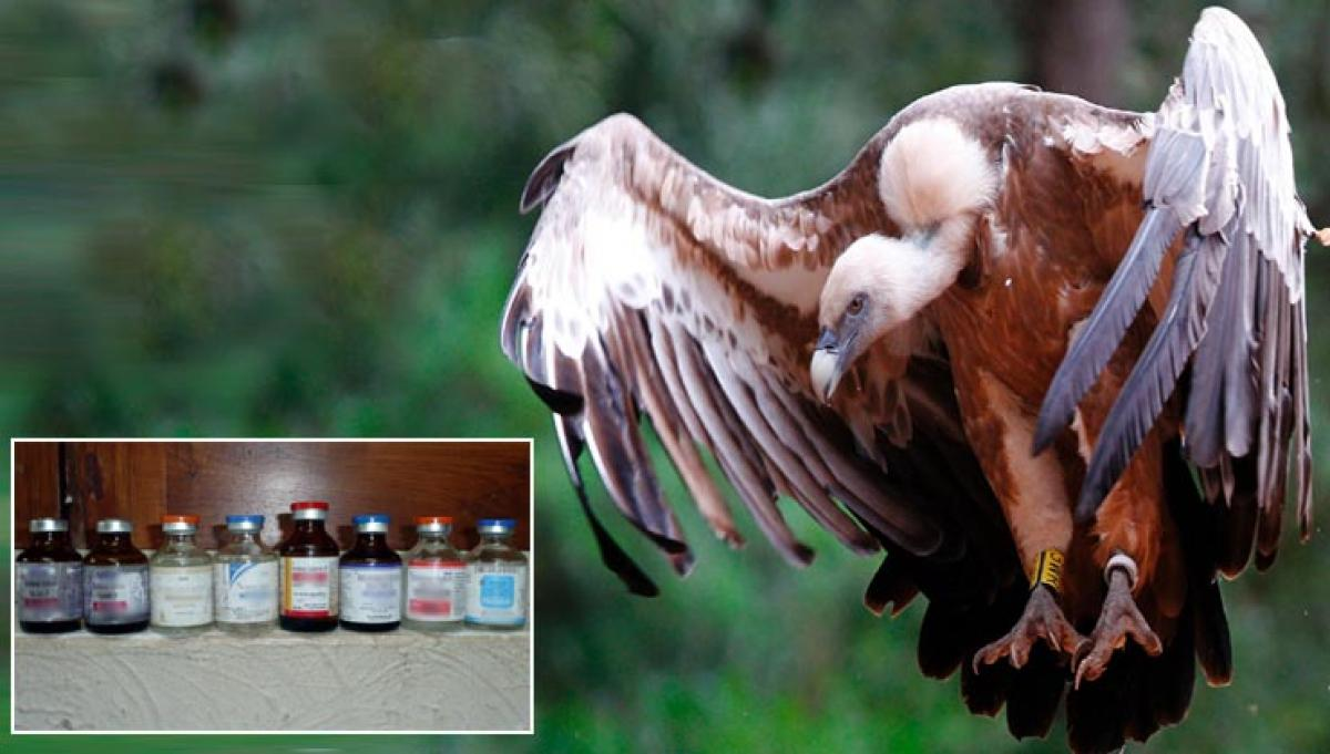 Ministry: Diclofenac package needs to be restricted to save vultures