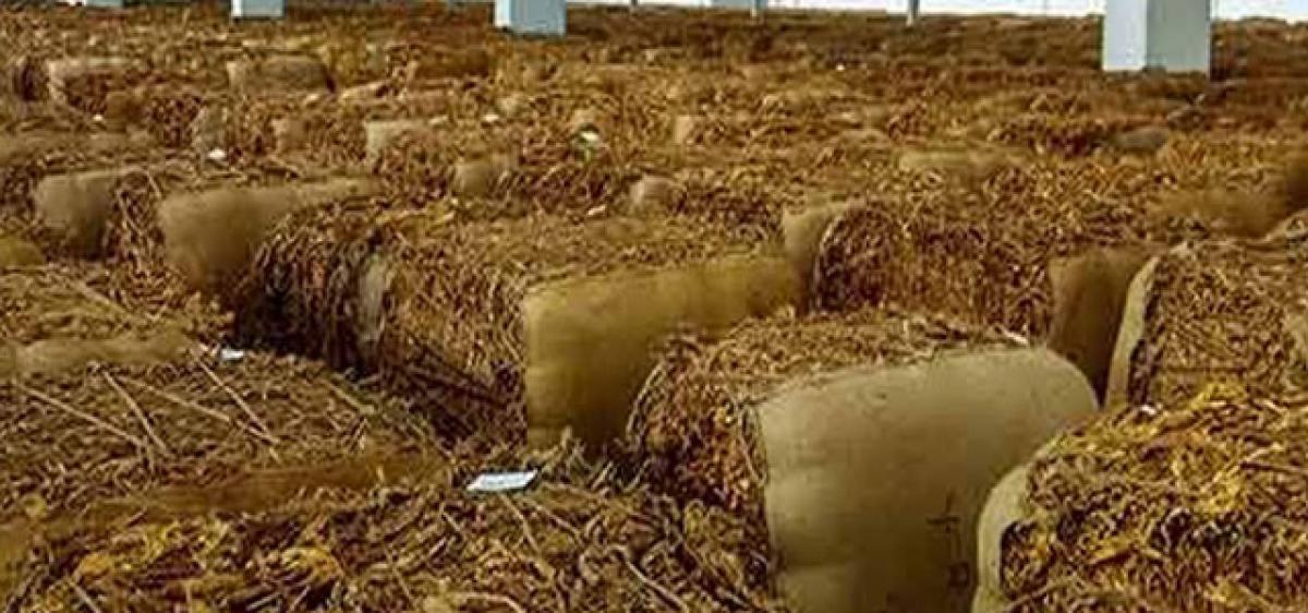 High taxes debilitate tobacco farmers in AP