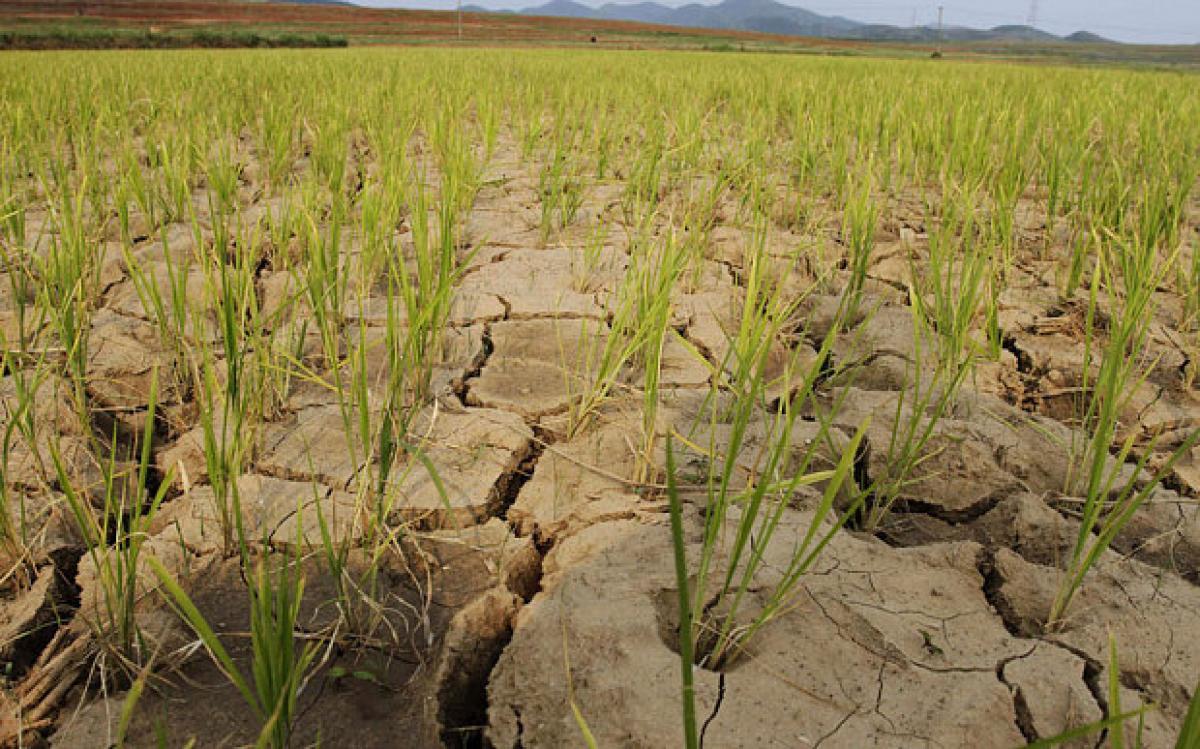 North Korea battles worst drought in a century