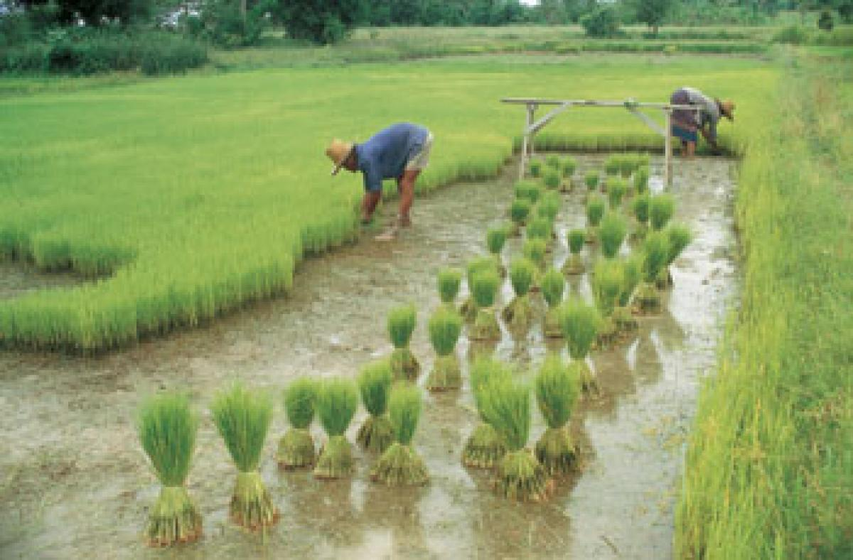 Agriculture didnt spur growth of human population