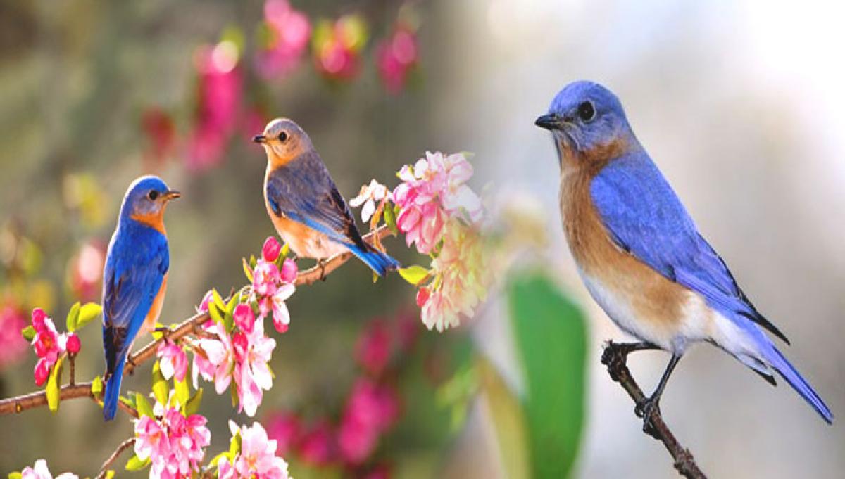 Birds sing louder to be heard