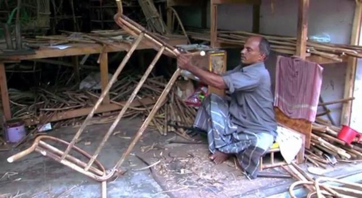 Cane furniture plant resurfaces in Nallamala