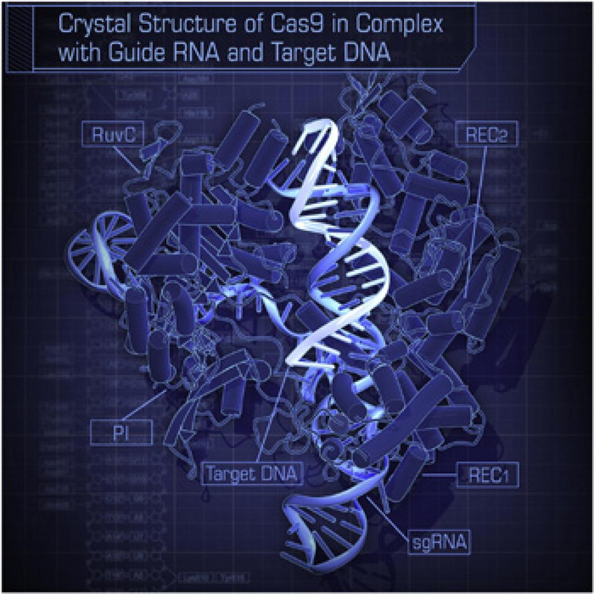CRISPR: Good science or evil science?