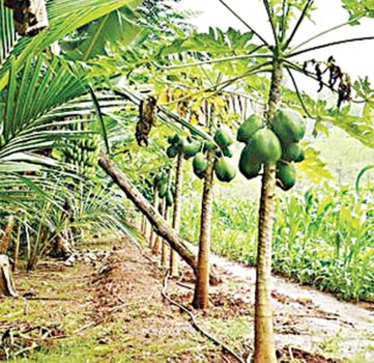 Integrated farming is the way forward