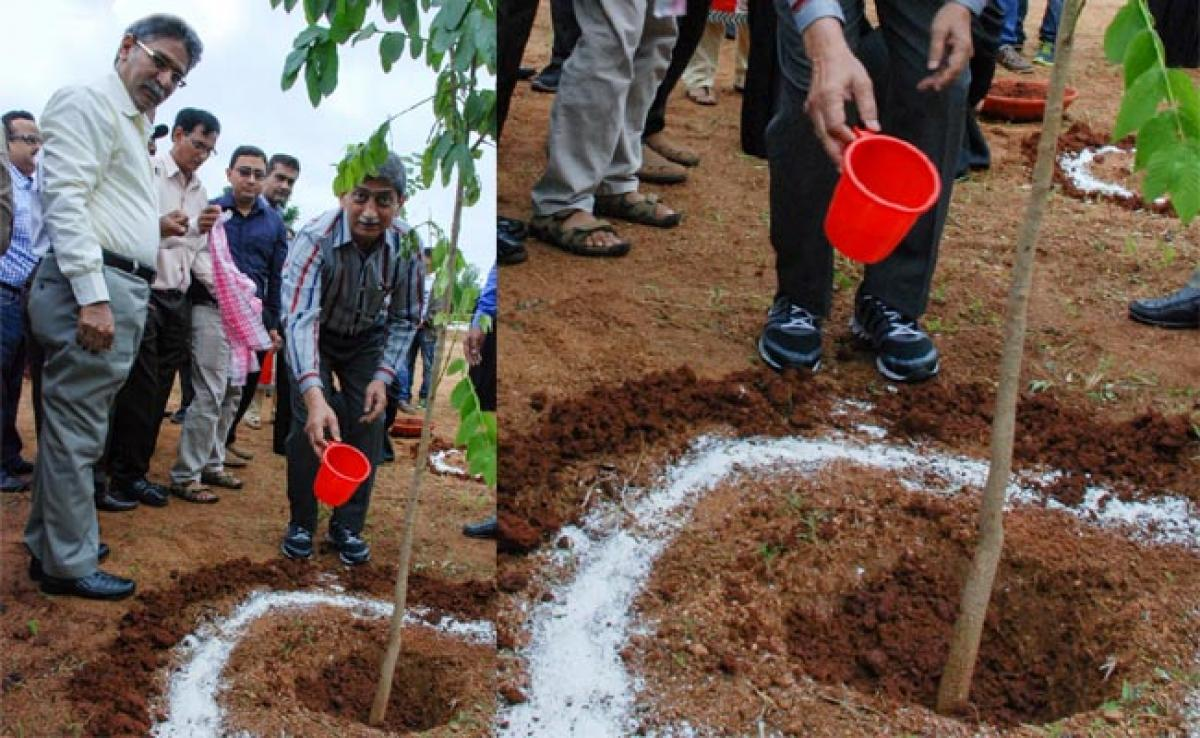 Tree plantation drive at Maulana Azad National Urdu University