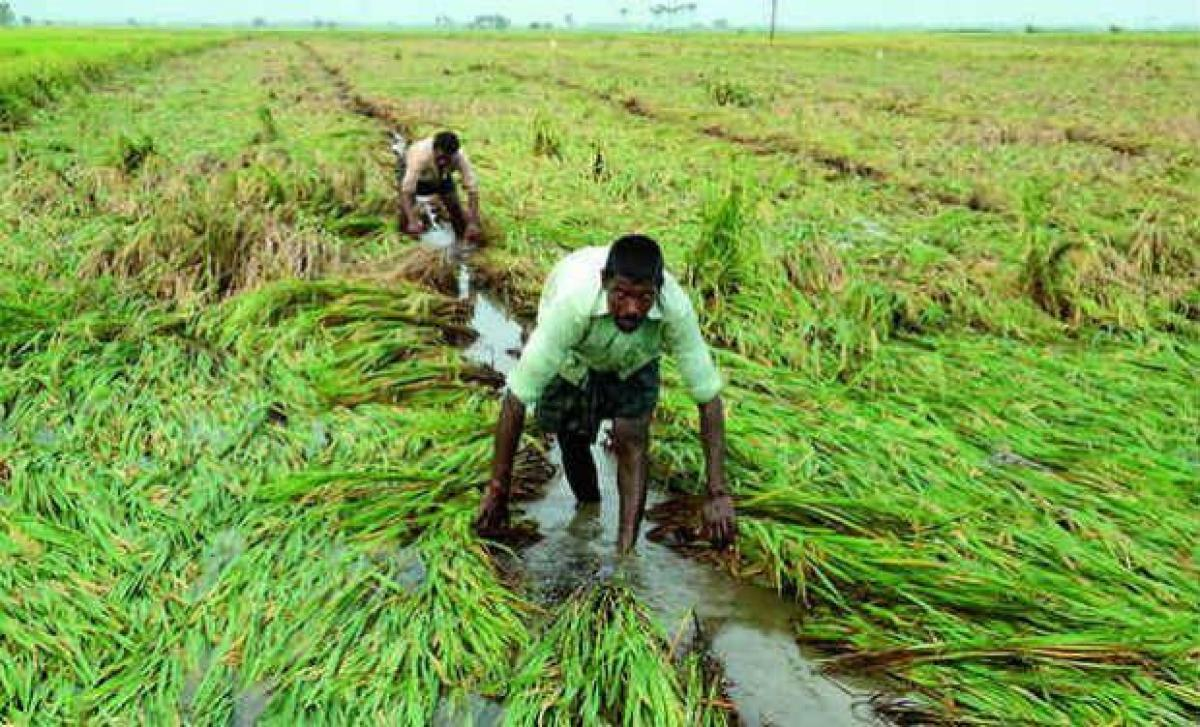 Students develop device to aid farmers in water cultivation