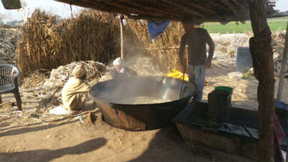 How farmers make jaggery from sugarcane in Punjab