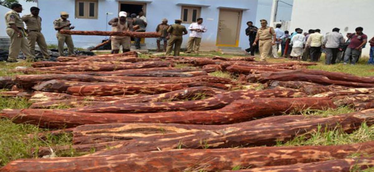 Global tenders for sale of 2,025 MT of red sanders soon