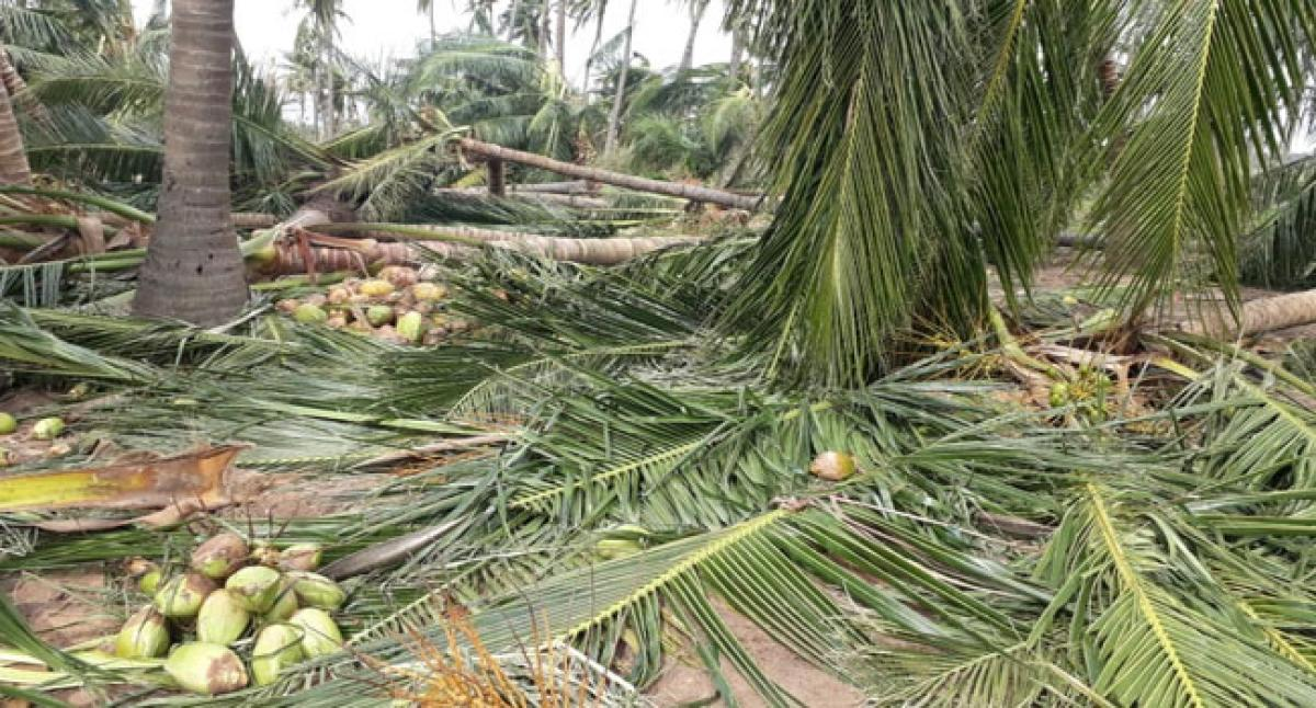 Titli cyclone hits 3.32 lakh farmers