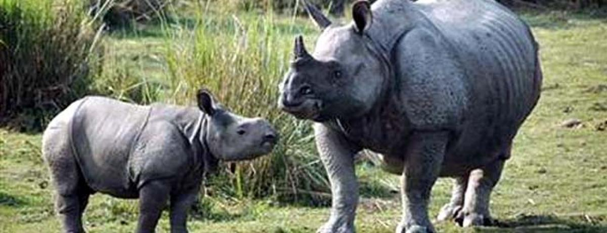 Assam forest department mulls measures to curb rhino poaching