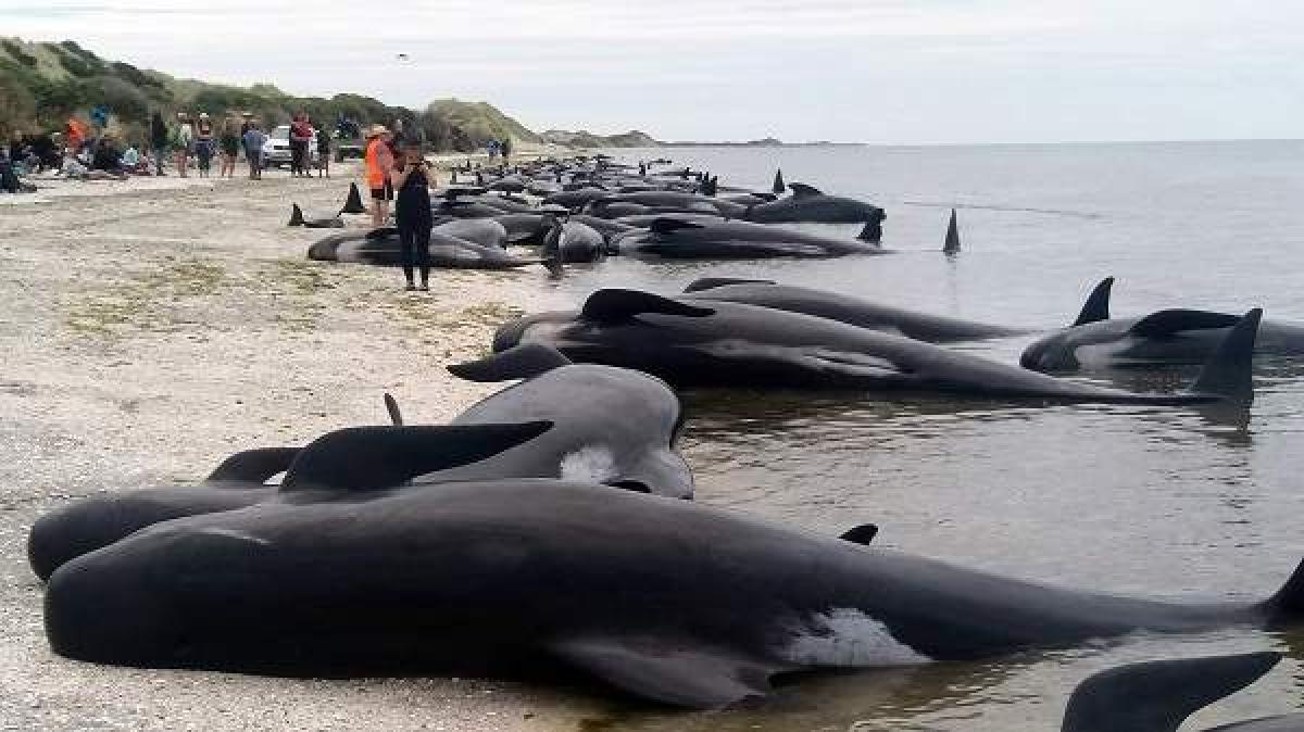 Japan Kills 333 Whales In Annual Antarctic Hunt
