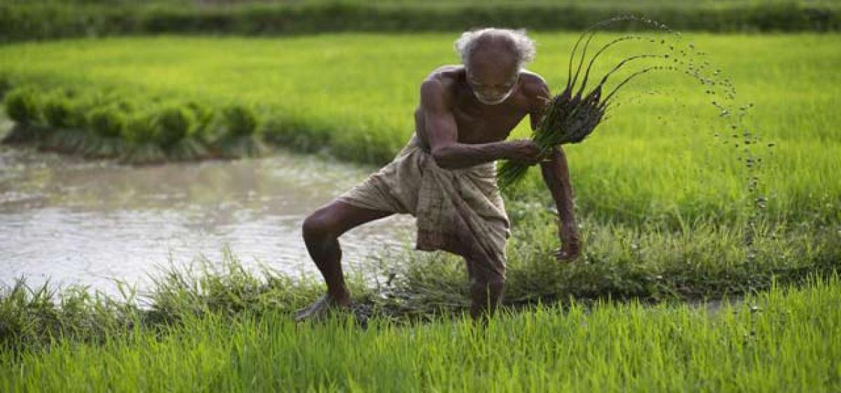 Making agriculture profitable