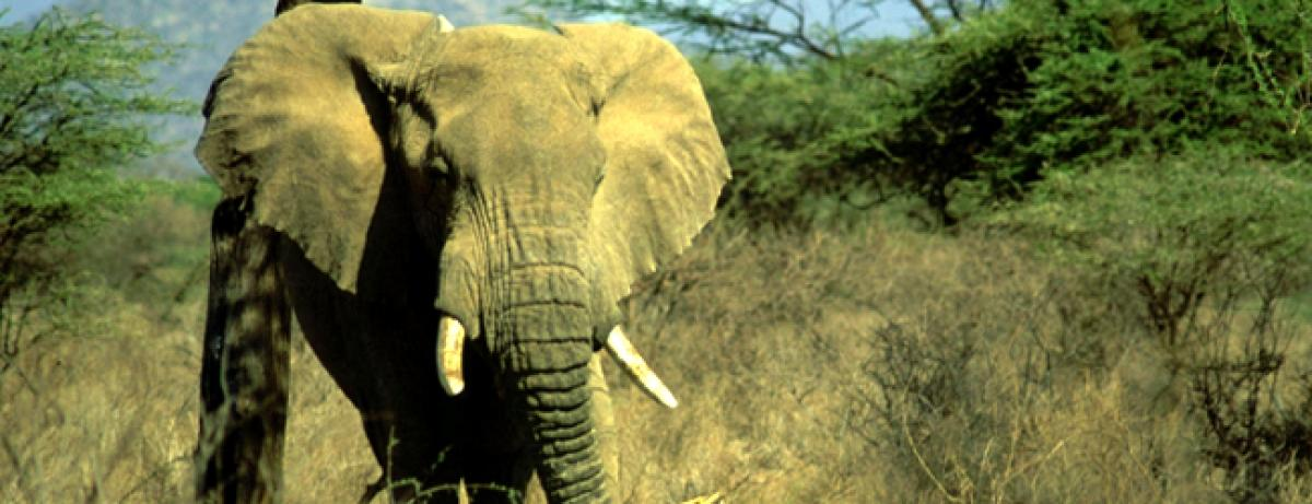 Fight against illegal trade in wildlife a key challenge