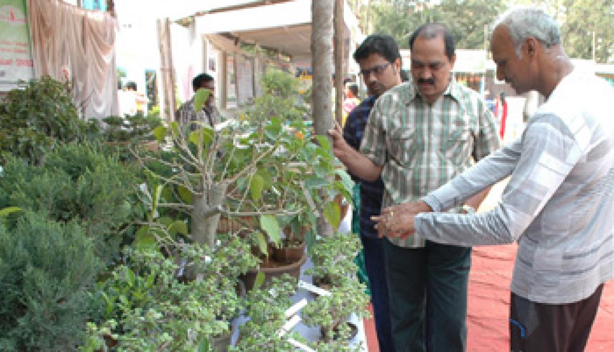 Bonsai plantation catches up in city