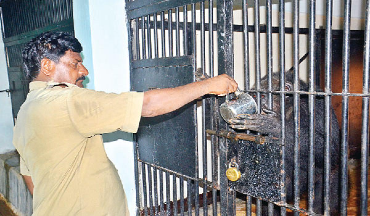 Cool treatment for zoo inmates