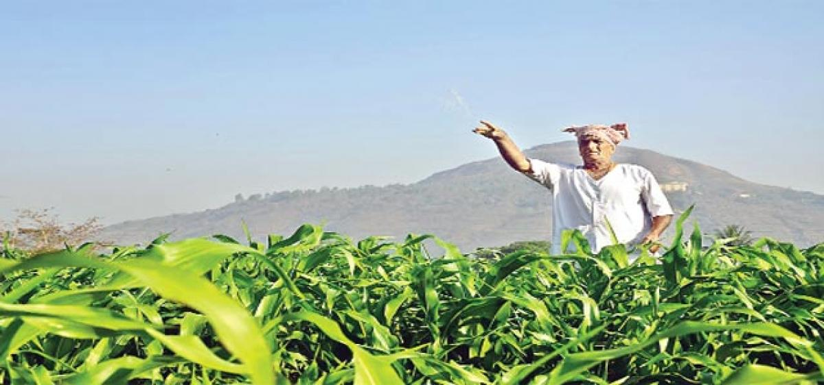 Impact of excess fertilser use by Nitrogen-fixated farmers