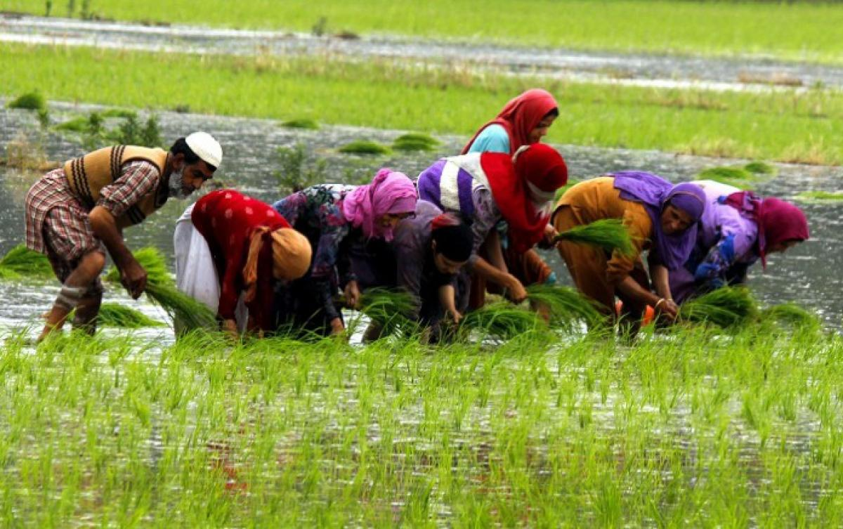 How rice farmers can minimise climate damage with water management