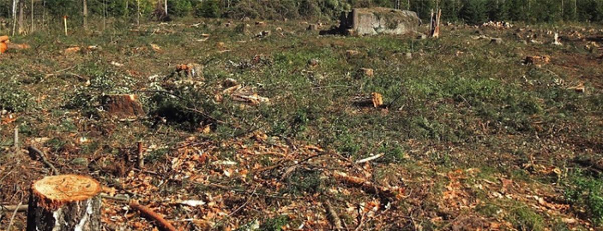 Haryana forests have been lost to encroachments and industrial projects