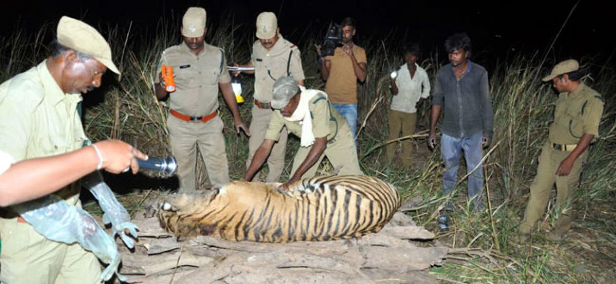DFO confirms death of tiger in Nallamala