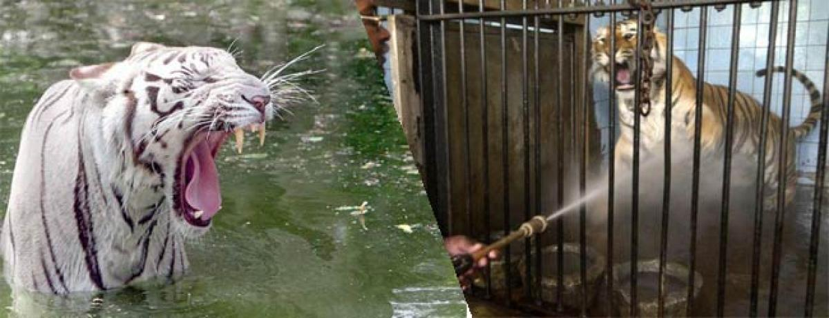 Delhi zoo animals beat the heat with coolers and water melons
