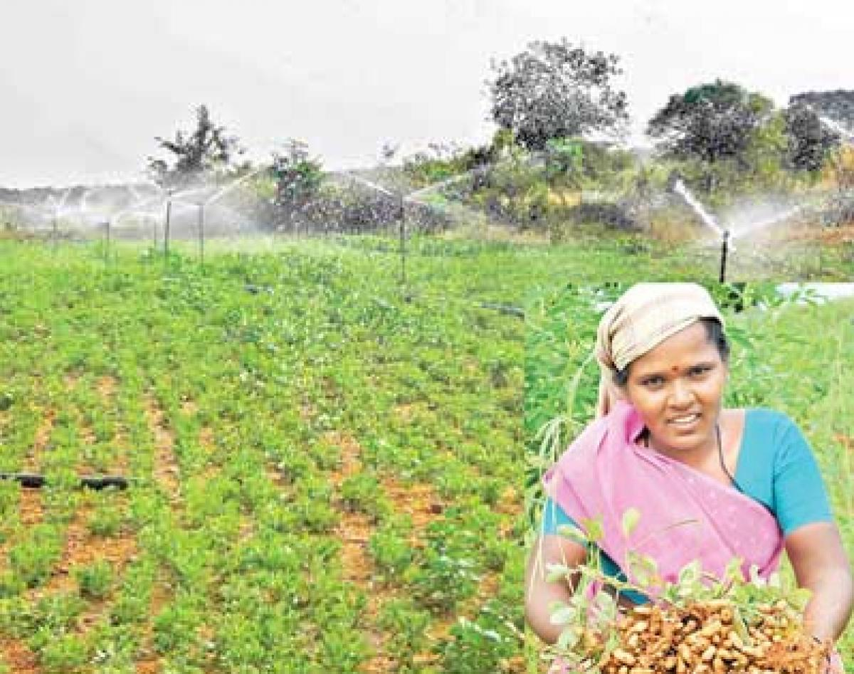 With high hopes on groundnut, farmers look to Rabi