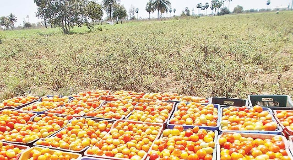 Tomatoes soar hit 120 per kg