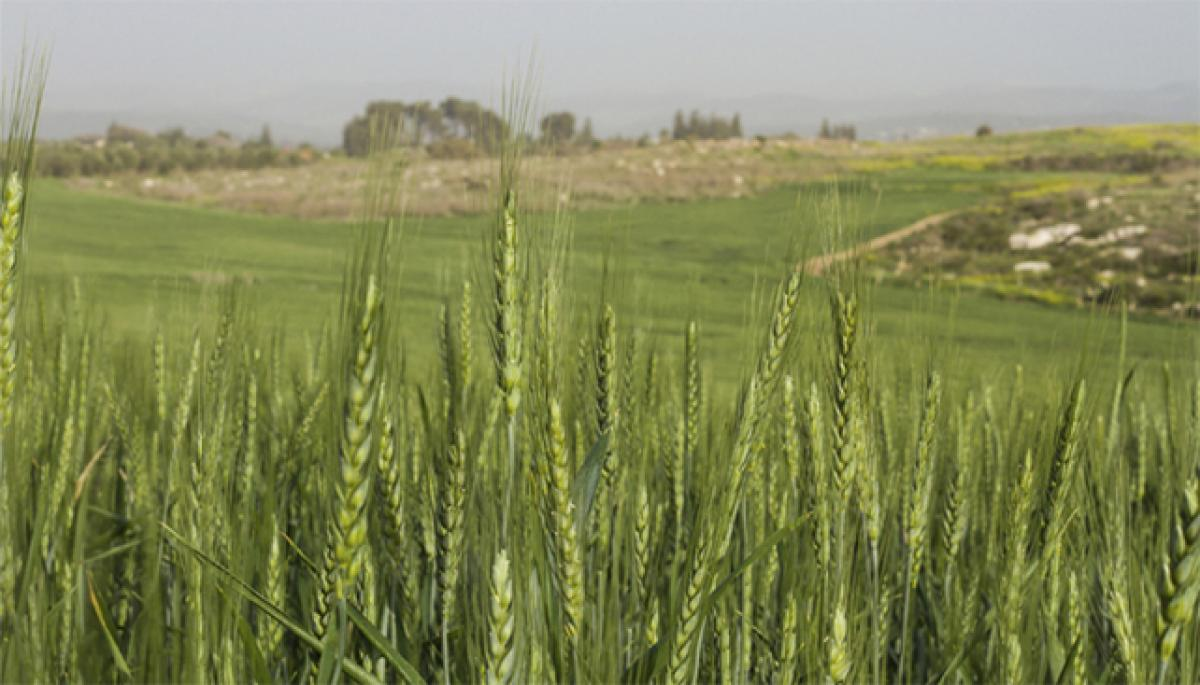 Crop nutrient quality hit by global warming
