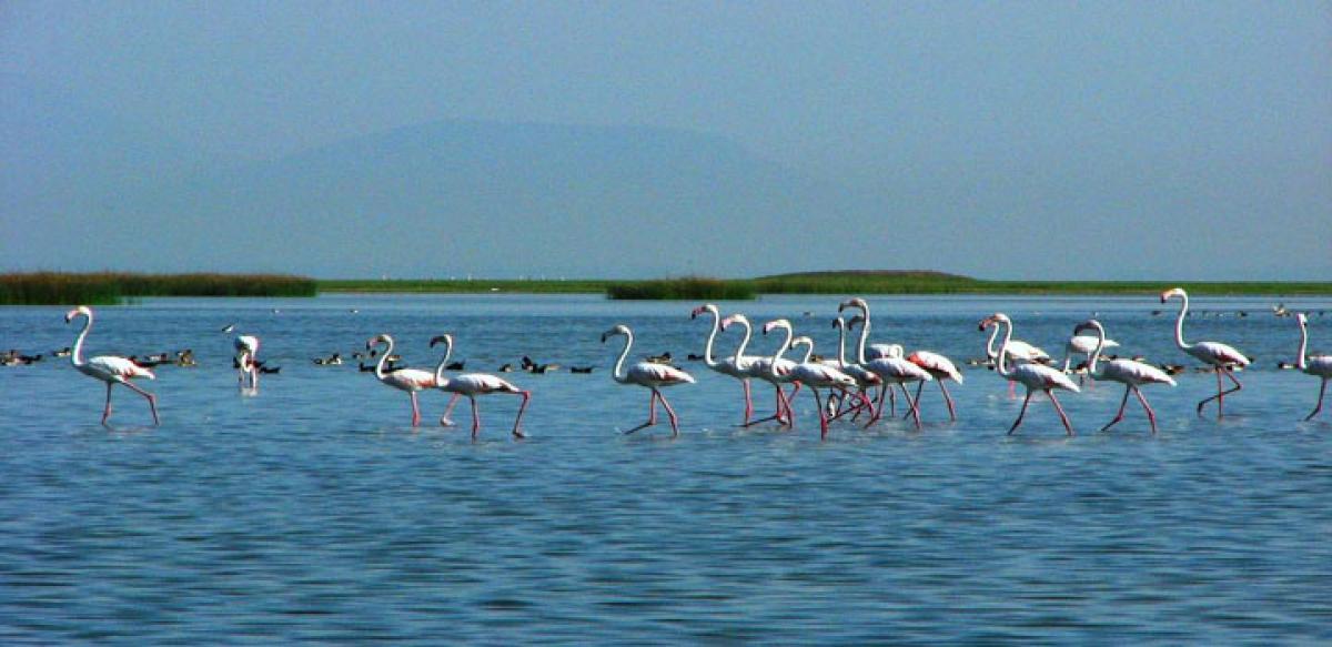 At Chilika, bird poachers turn protectors