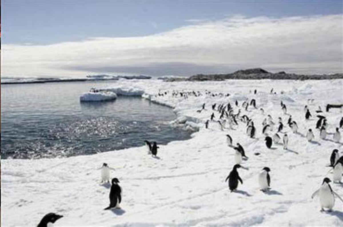 Shrinking glaciers up penguin numbers, says report