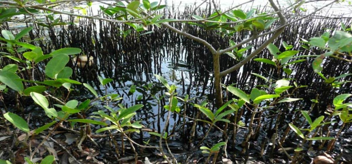 Wetland ecosystems imbibe excess CO2 and mitigate climate effects