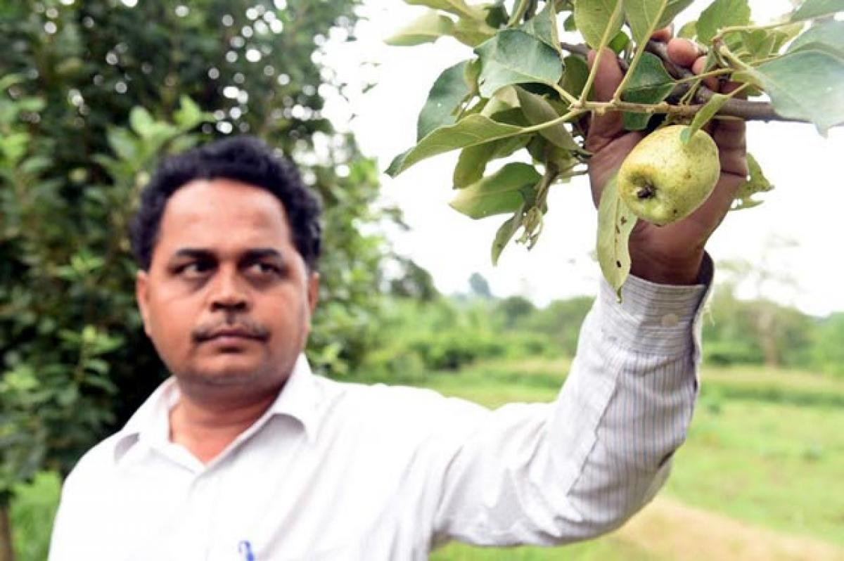 Why Kashmir? Apples are grown in Vizag!