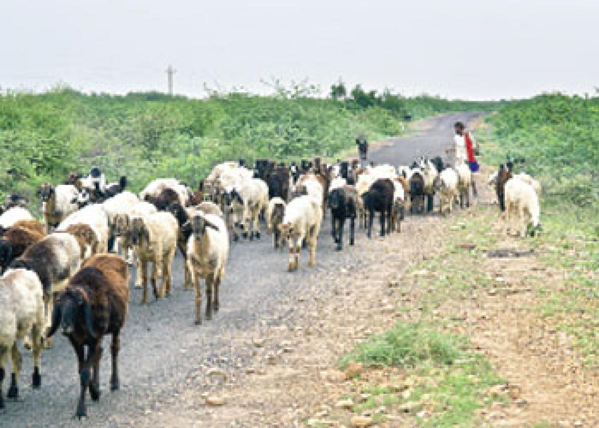 Shortage of doctors affecting livestock