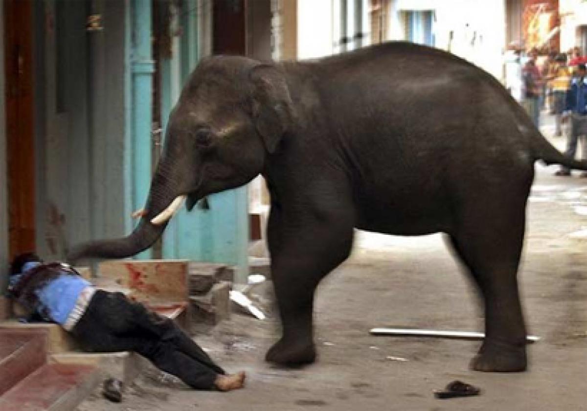 Elephant tramples man to death in Siliguri