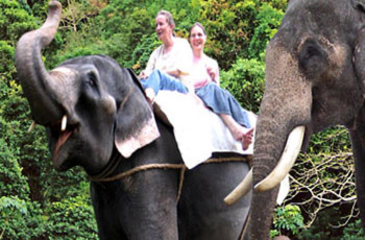 Wildlife unharmed by ecotourism