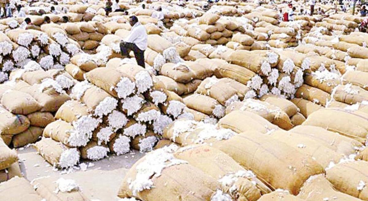 After all toil & sweat, cotton farmers forced to shed tears