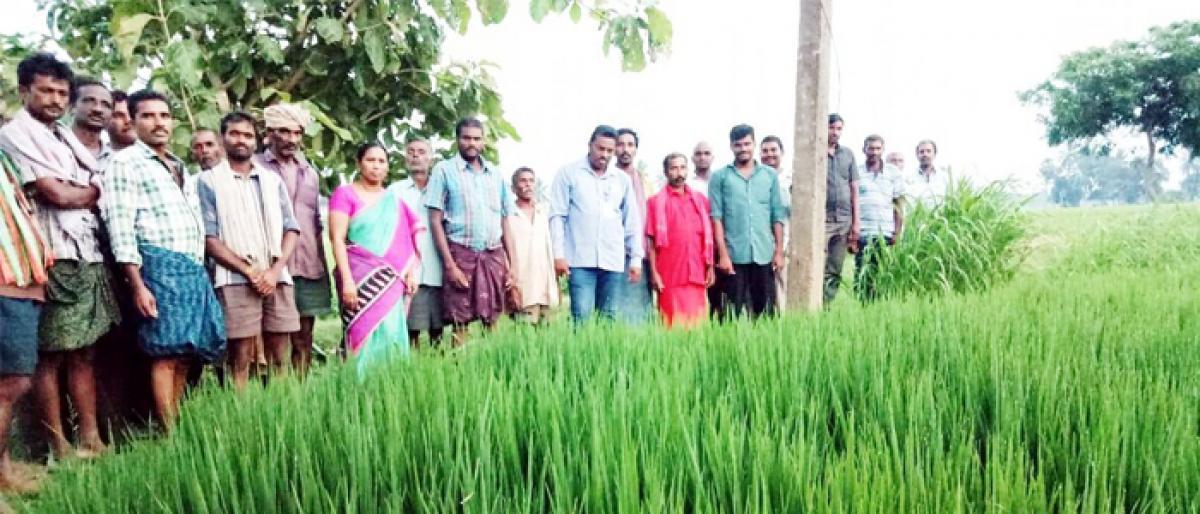 Natural farming averts diseases