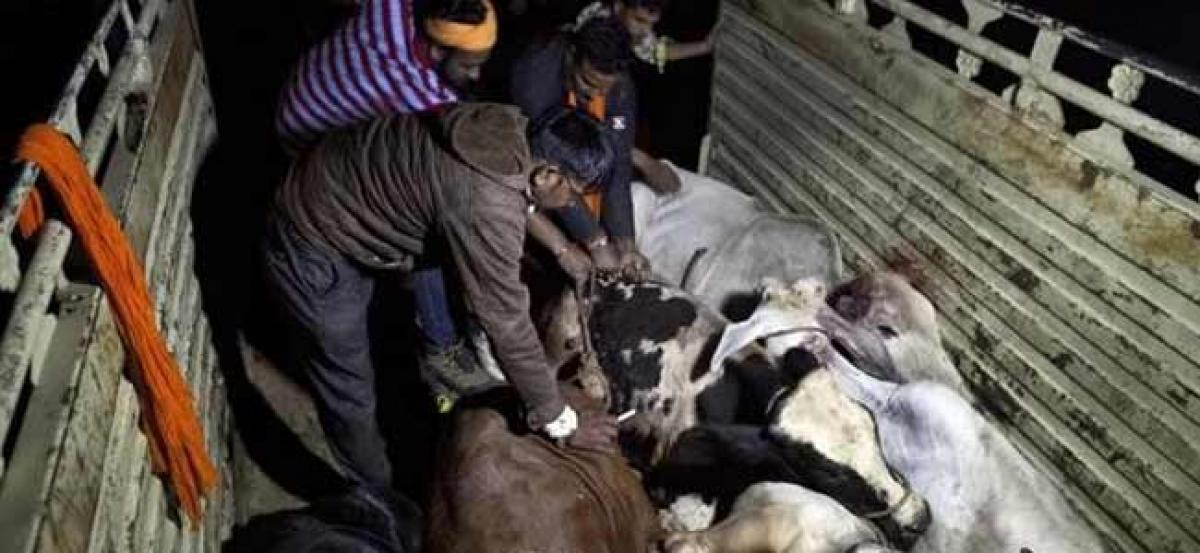 Suspected Cow smuggler killed in retaliatory firing by police in Alwar