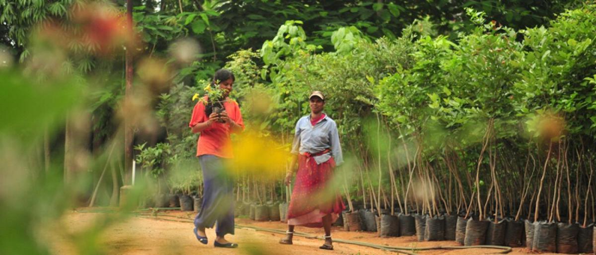 Target to plant one lakh saplings in Vikarabad and Tandur each