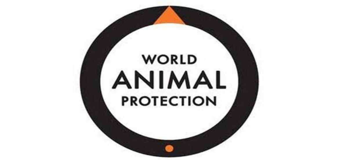 World Animal Protection calls on the government of India to invest in cleaner oceans
