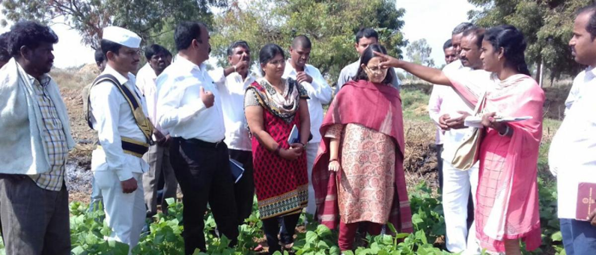 Farmers told to take up vegetables cultivation