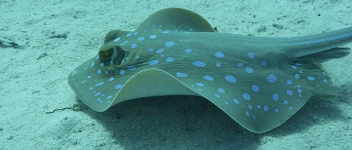 Australian swimmer dies after rare stingray attack