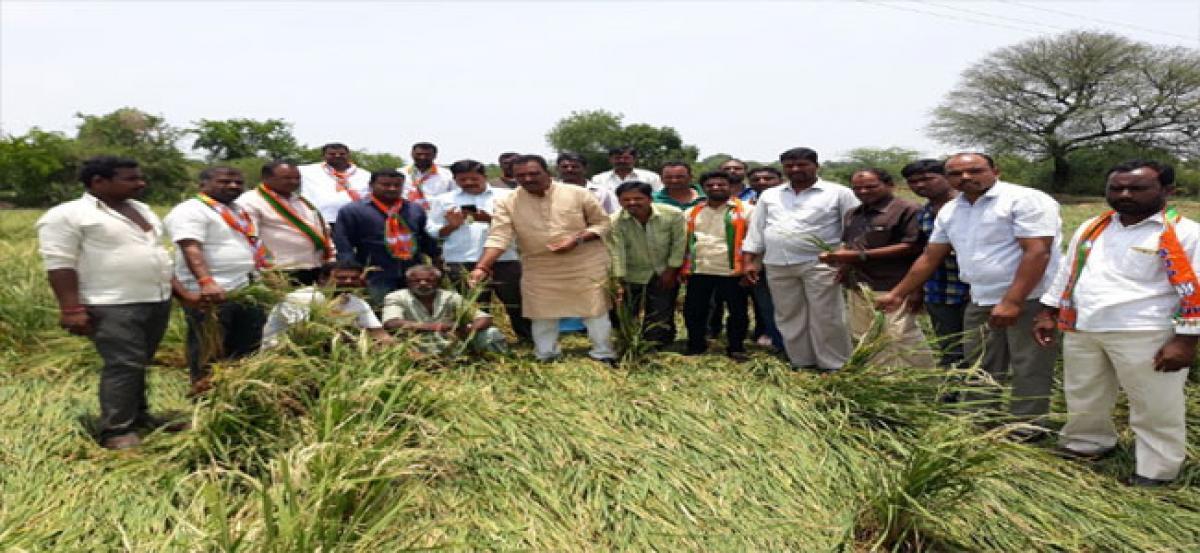 BJP leaders inspect rain-hit crops