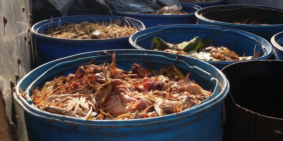 Chicken waste used to feed fishes