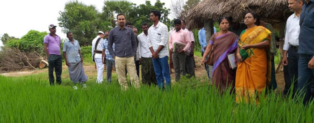 Collector gets a feel of organic farming