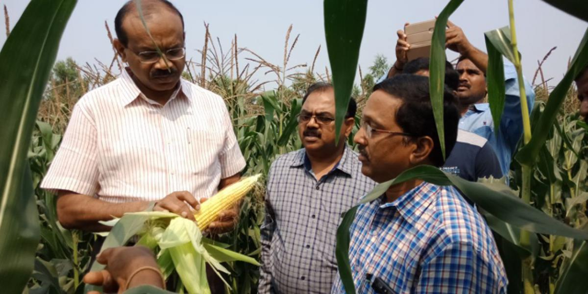 Farmers told to sow irrigated dry crops to tide over financial crunch