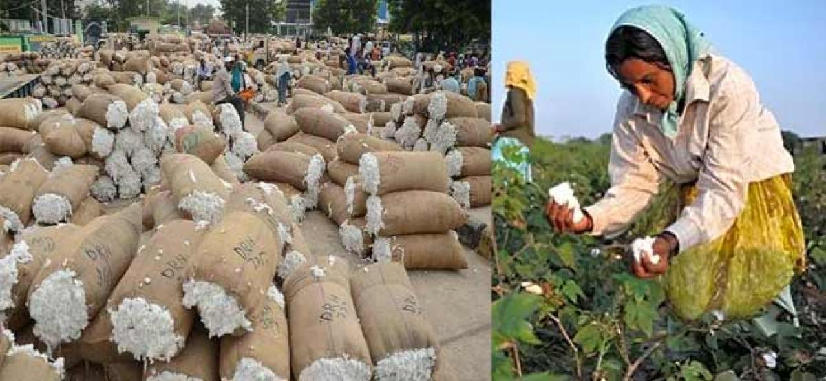 Cotton purchasing centers to be arranged in Srikakulam