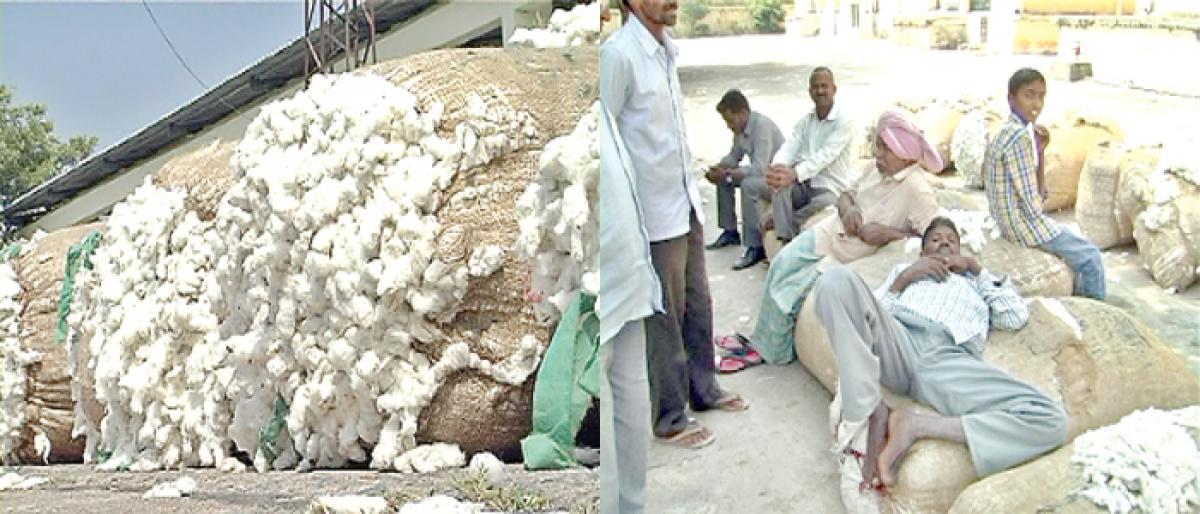 Traders continue to loot cotton farmers